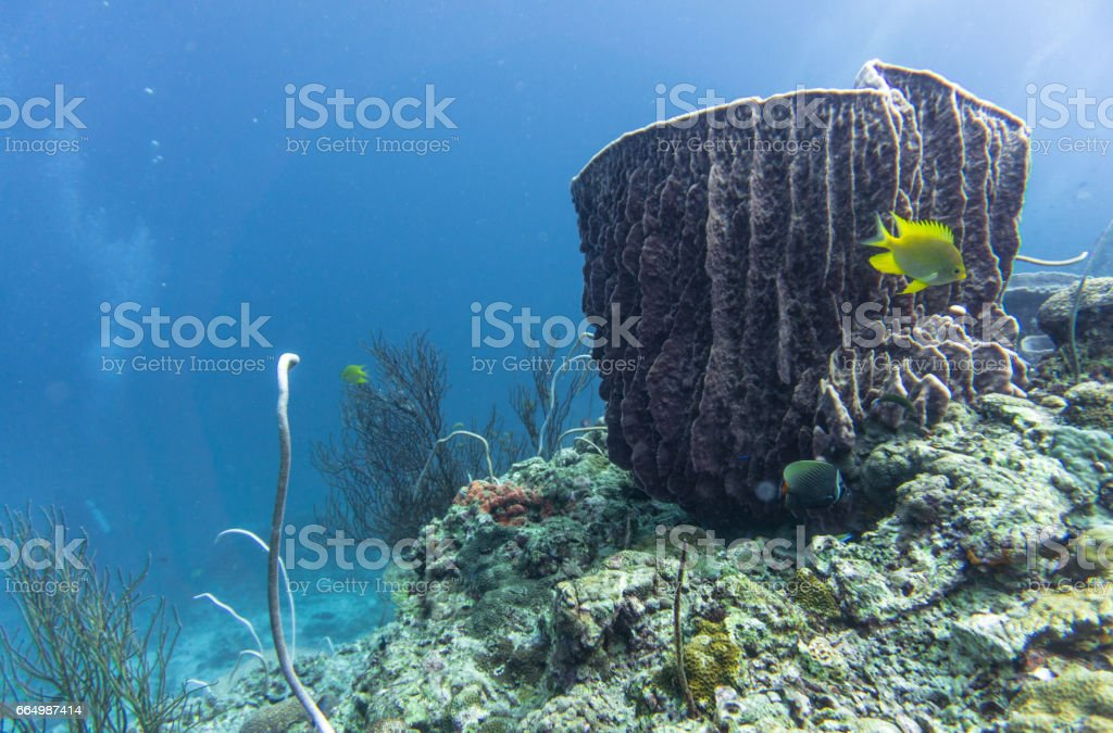 Barrel sponge (Xestospongia testudinaria), whip coral (Junceella) and Sea fan coral (Gorgonian).  Distressed Coral Reef Bleaching on Damaged Fragile Ecosystem Ocean Environment. stock photo