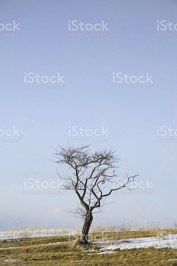 Barren field tree royalty-free stock photo