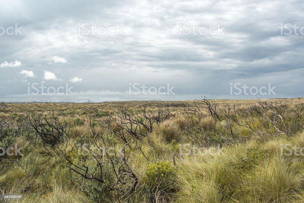 barren stock photo