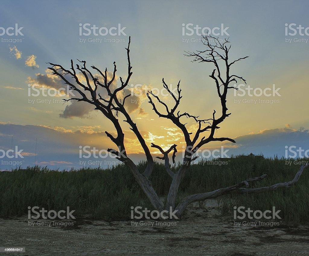 Barren Tree on a Beach stock photo