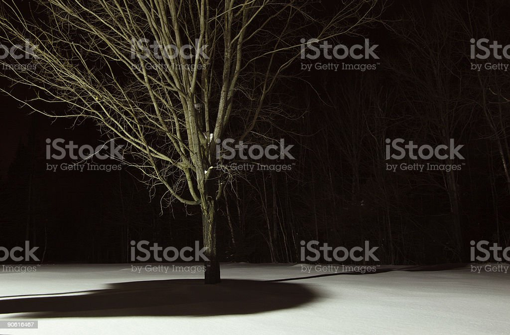 Barren Tree on a Winter Night royalty-free stock photo