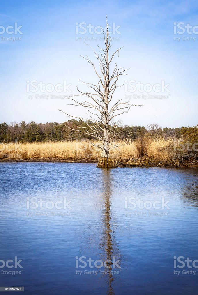 Barren Tree Under Winter Sky royalty-free stock photo