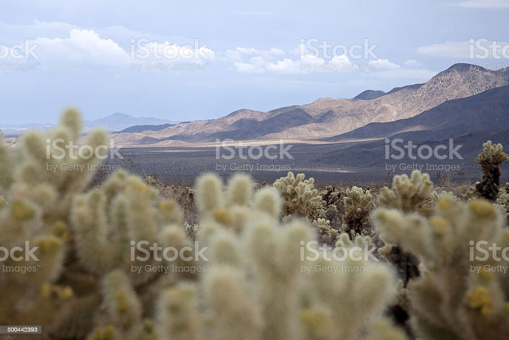 Barren valley from Cholla patch stock photo