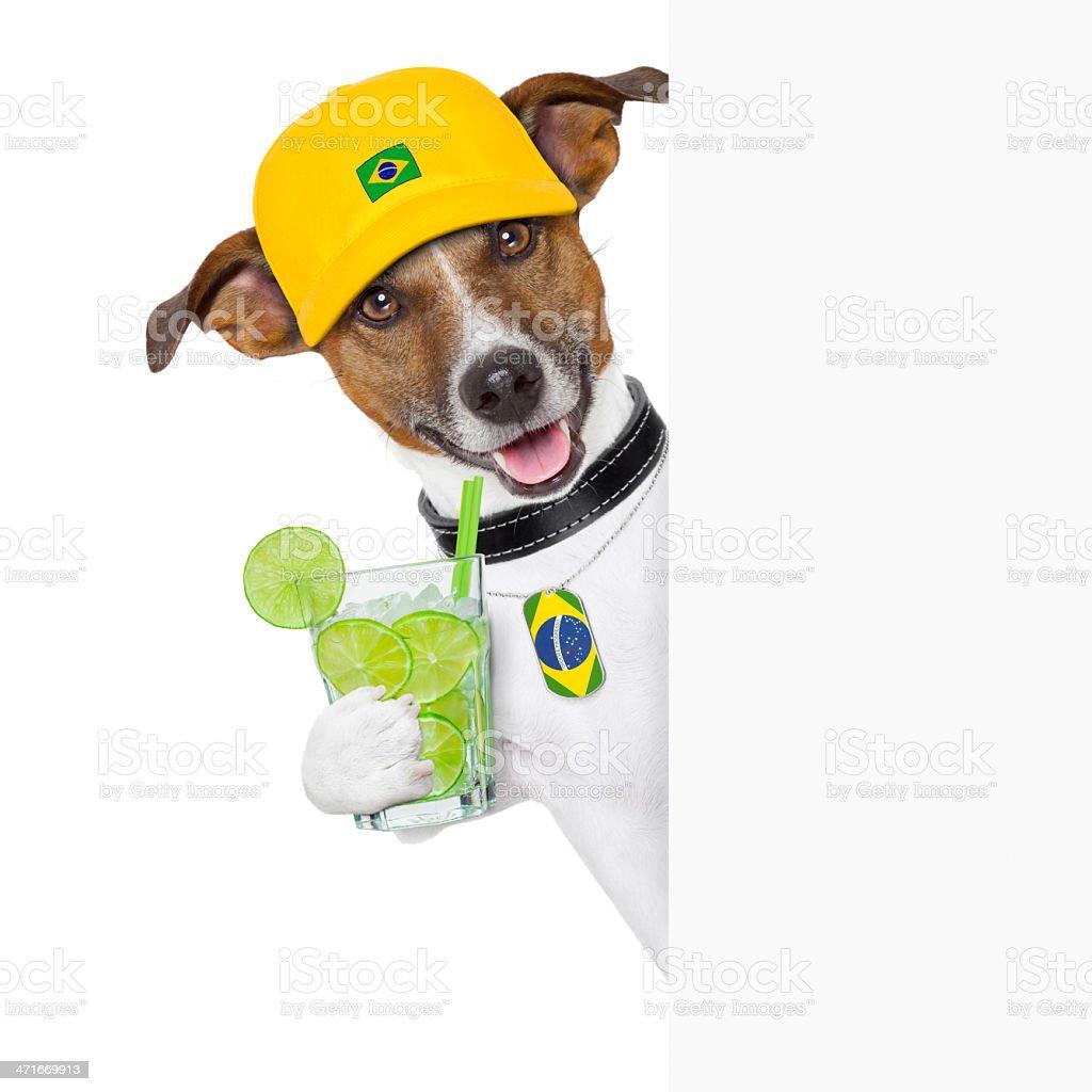 barzil dog royalty-free stock photo