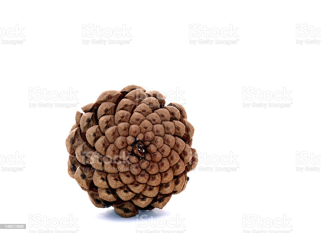 Base of a pine cone royalty-free stock photo