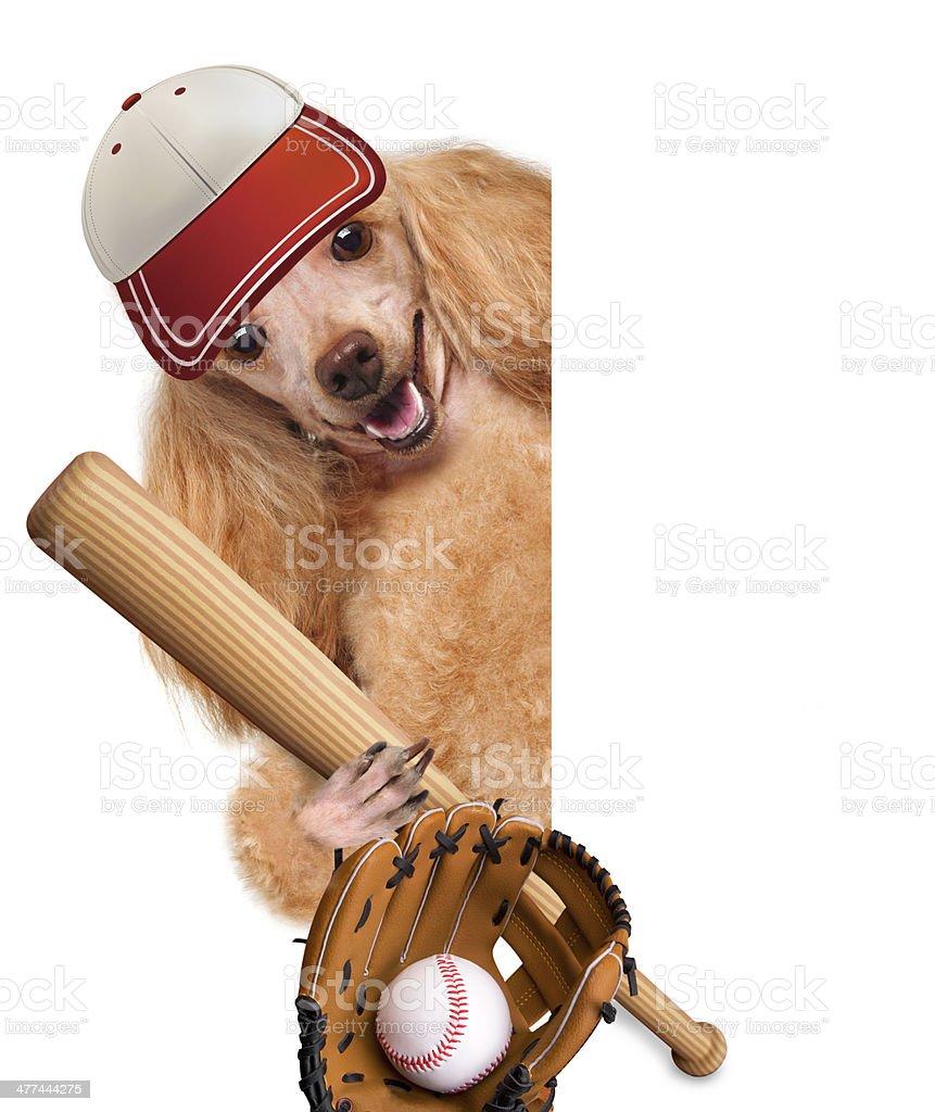 baseball dog with a baseball