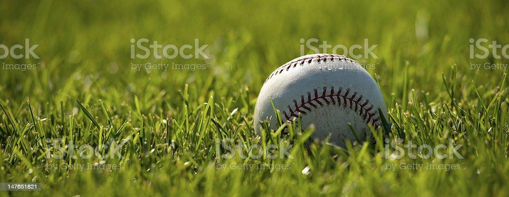 Baseball on Grass stock photo