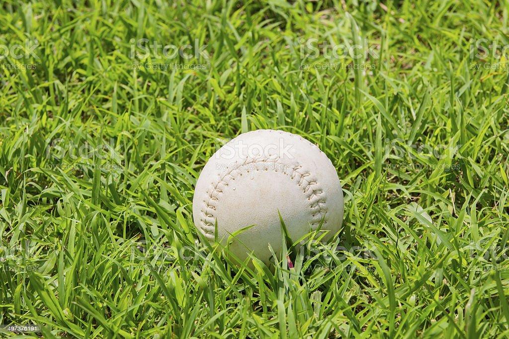 baseball on the fresh green grass . stock photo