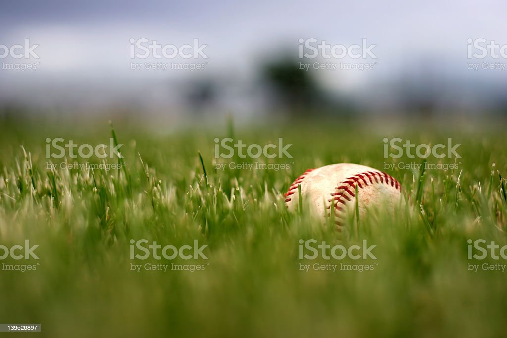 Baseball resting in green grass  royalty-free stock photo