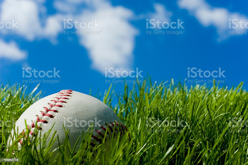 Baseball set on tall, green grass on a clear day stock photo