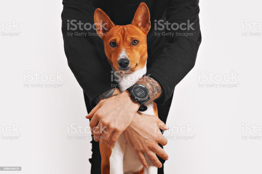 Basenji dog hugged by the owner stock photo