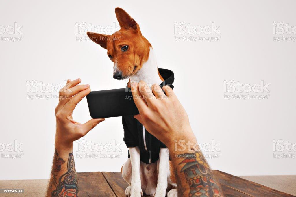 Basenji dog in hoodie with smartphone stock photo