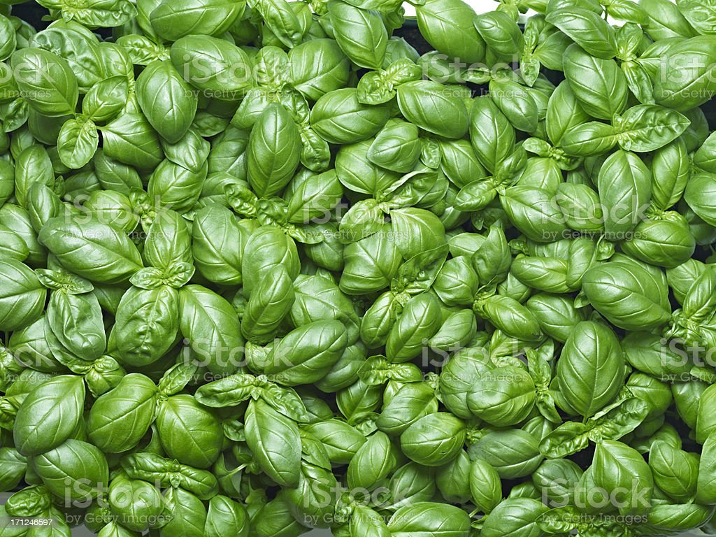 Basil Background stock photo