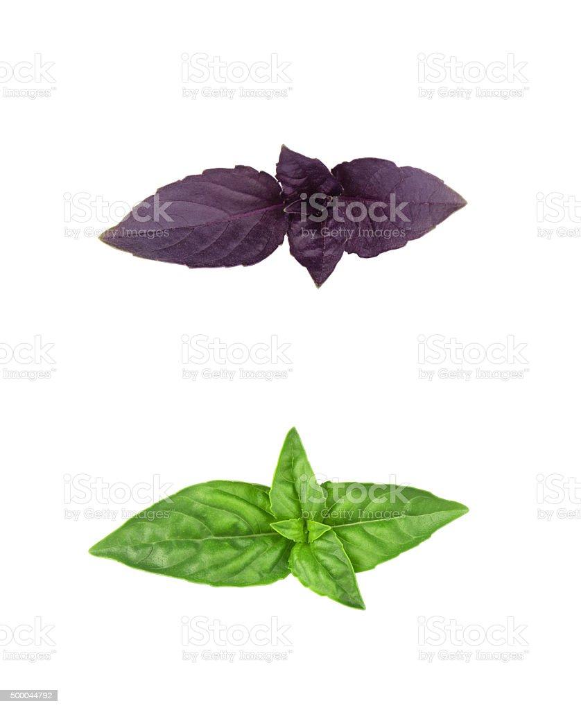 Basil isolated on white background stock photo