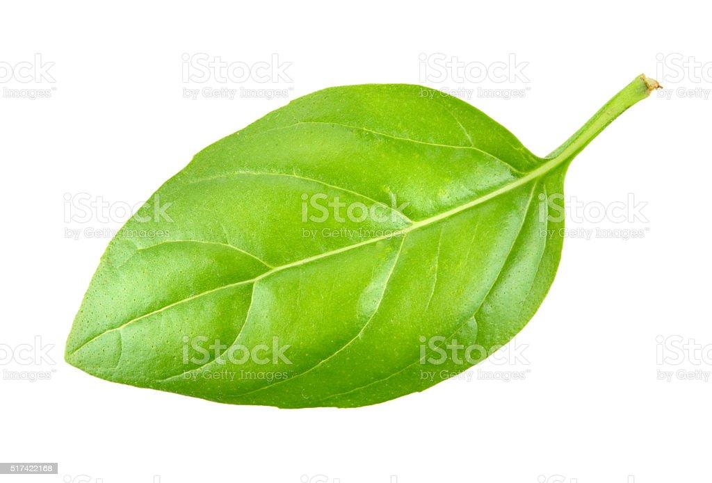 Basil leaf closeup on white stock photo