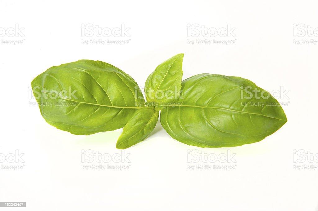 Basil Leaf royalty-free stock photo