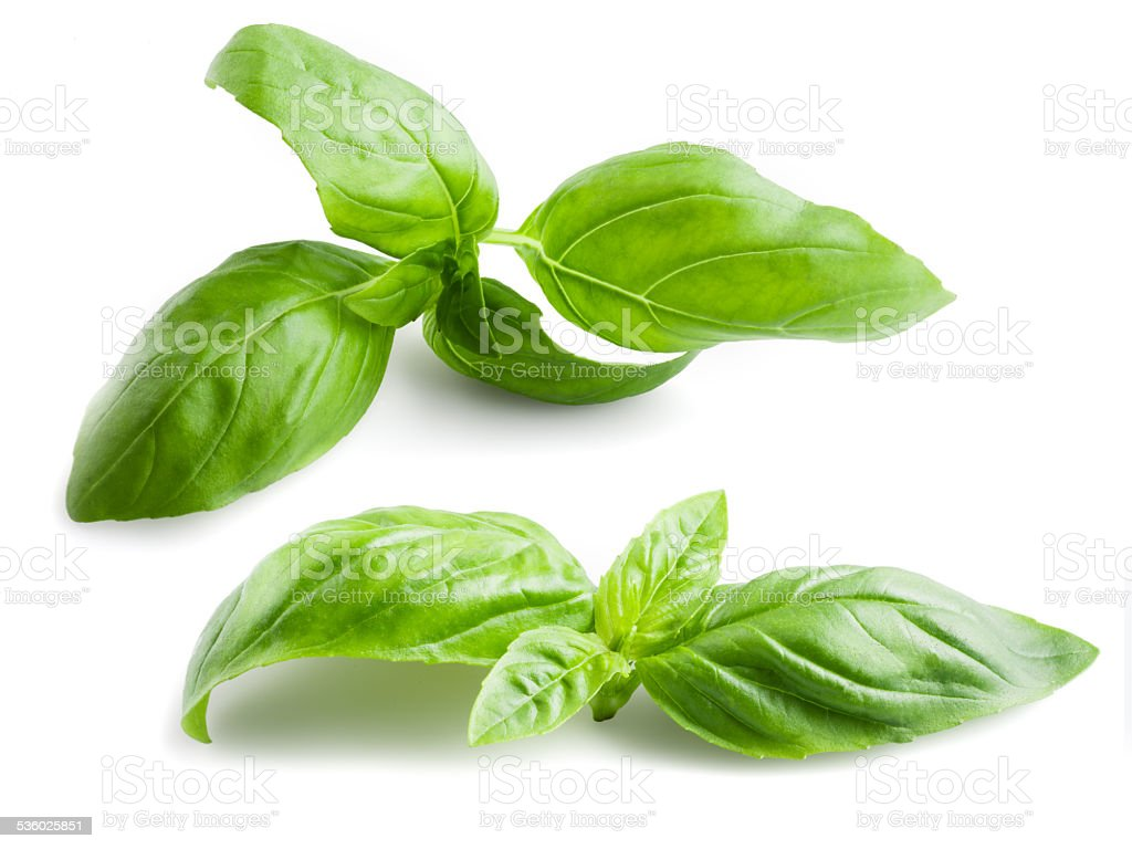 Basil leaves isolated on white background stock photo