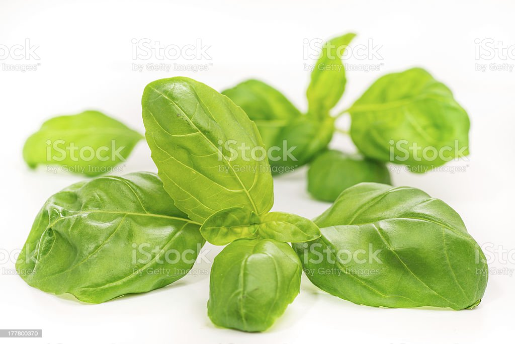 Basil leaves, isolated on white stock photo
