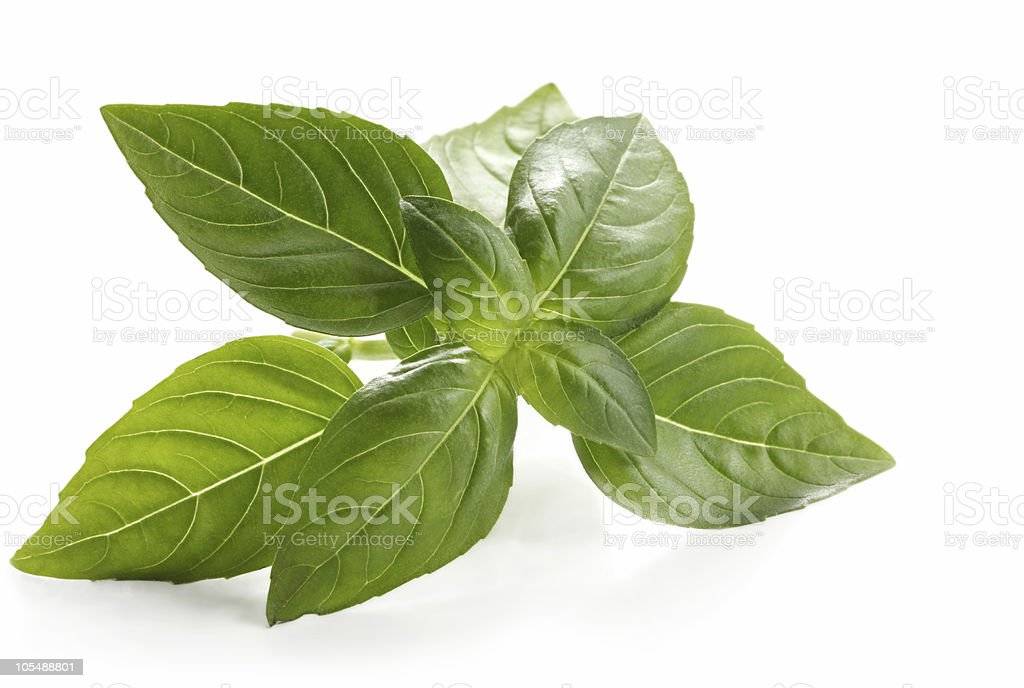 Basil leaves on white background royalty-free stock photo