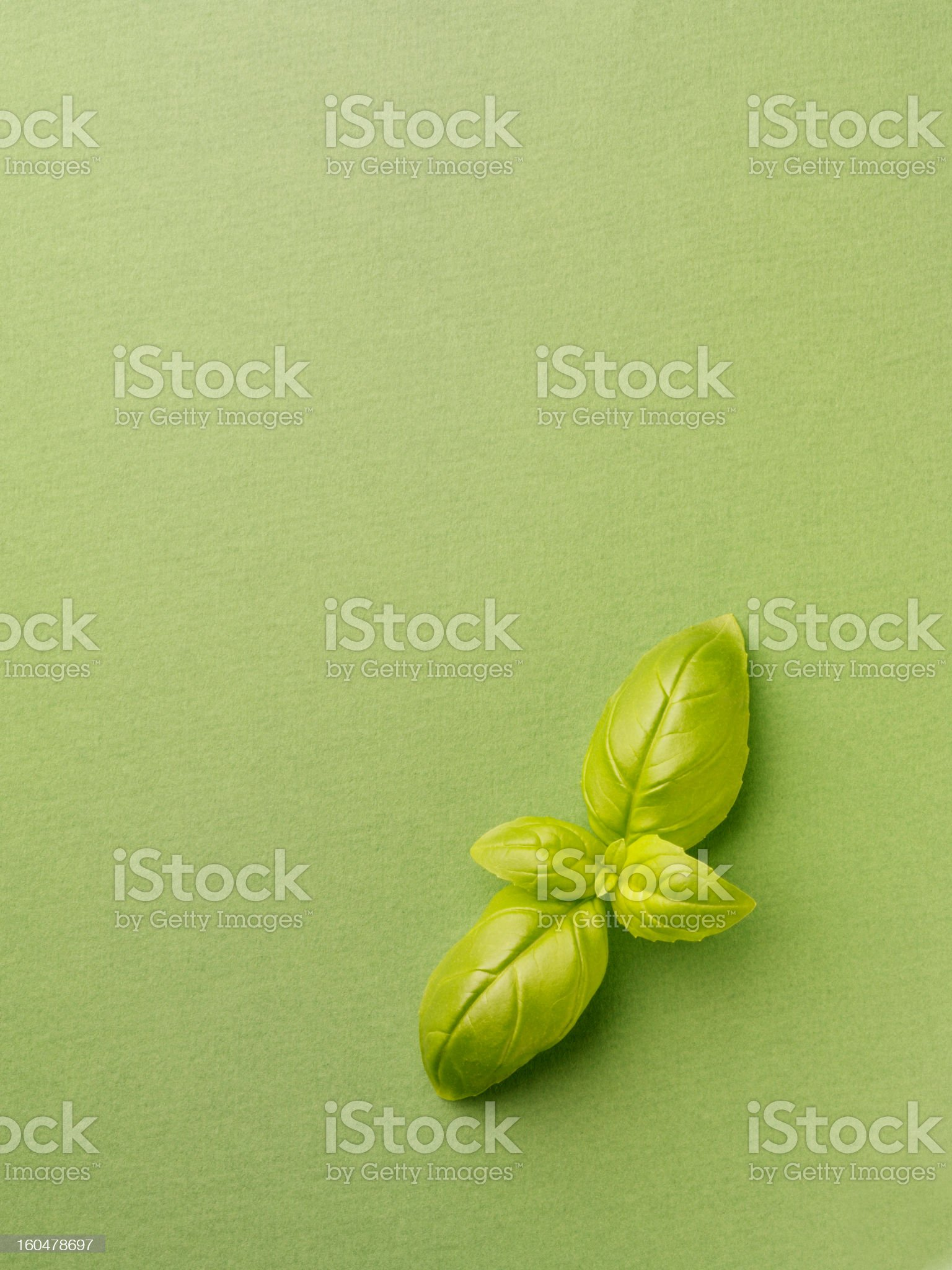 Basil on a Green Background royalty-free stock photo
