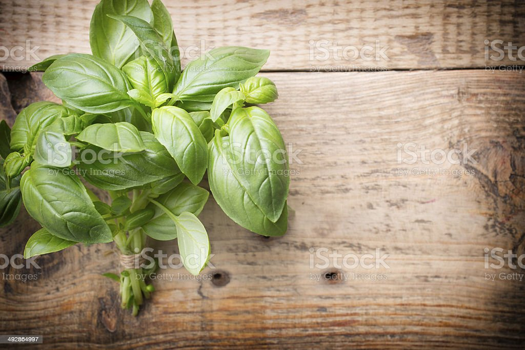 Basil. stock photo