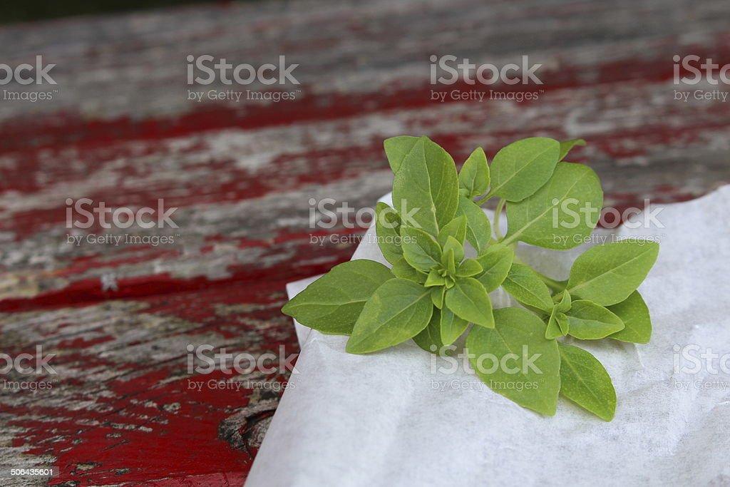 Basil stock photo