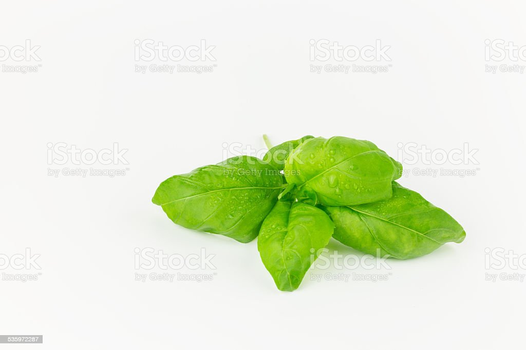 Basil royalty-free stock photo