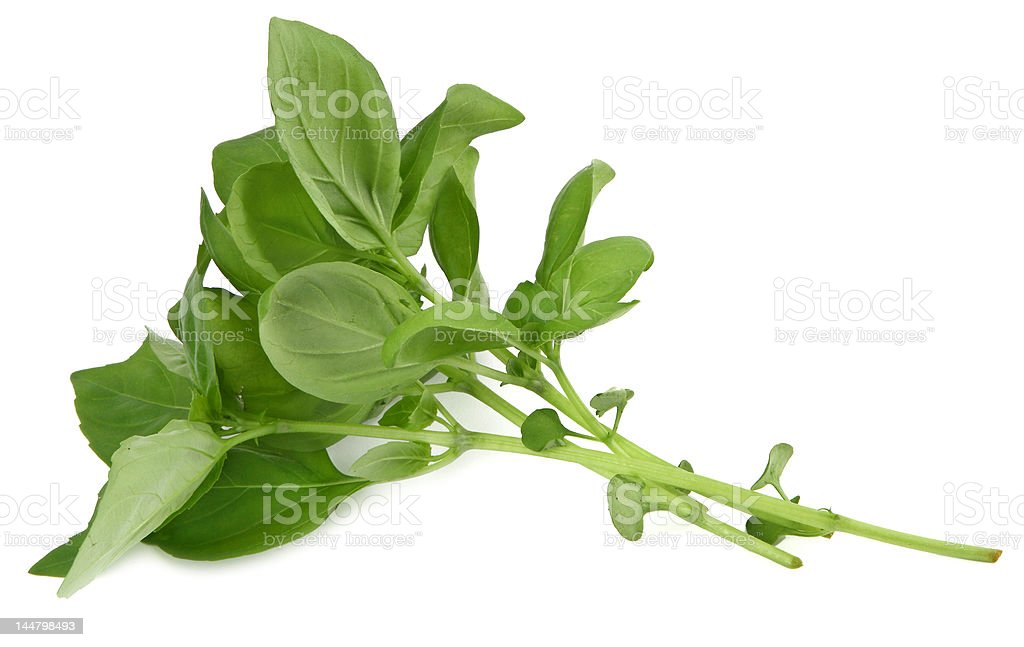 basil profile royalty-free stock photo