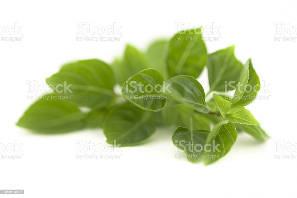 Basil Sprig On White royalty-free stock photo