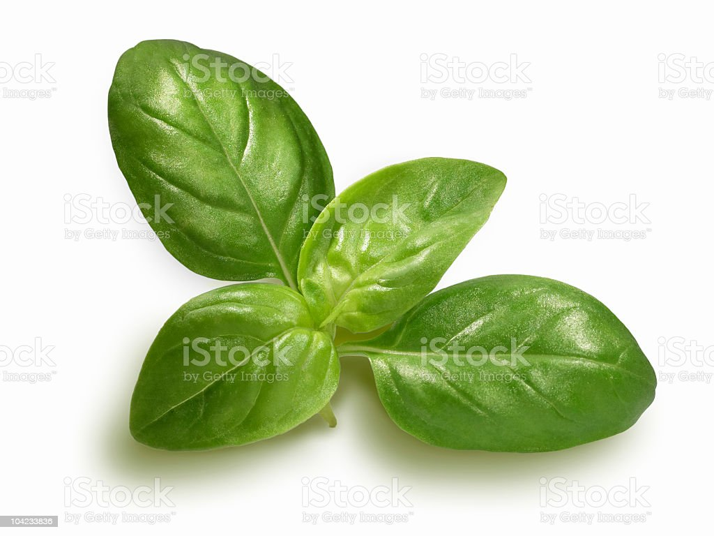 Basil sprig stock photo