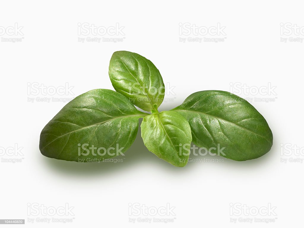 Basil sprig royalty-free stock photo