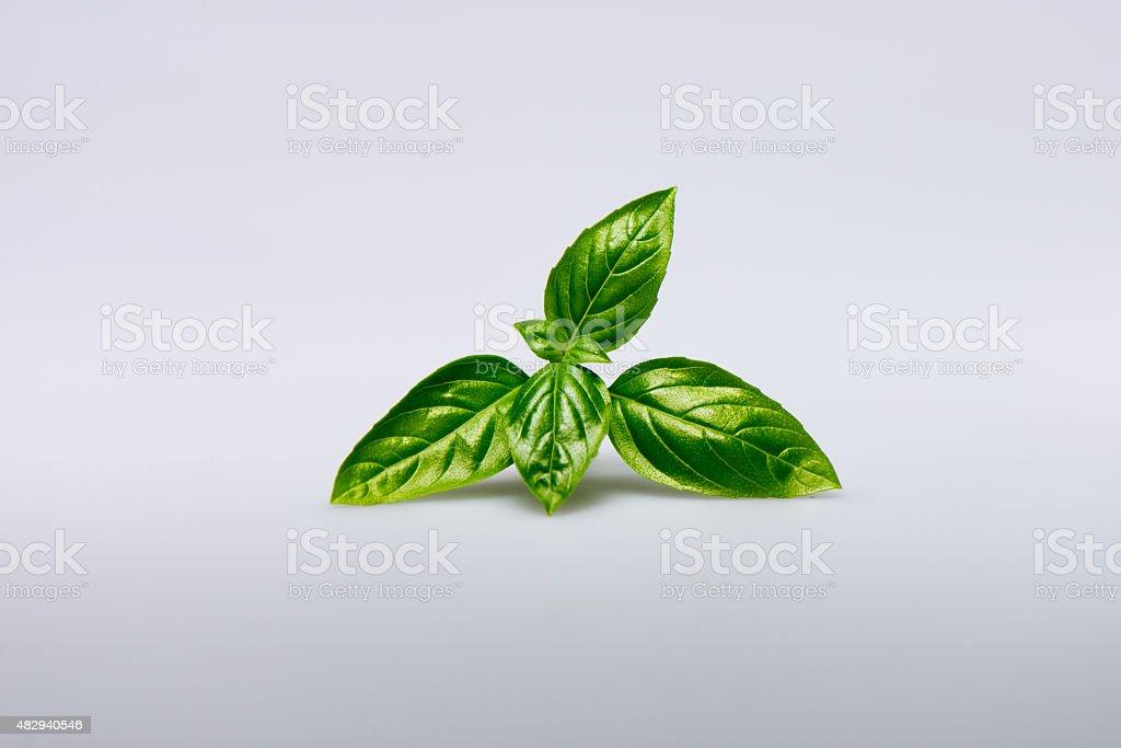 Basil sprig stock photo