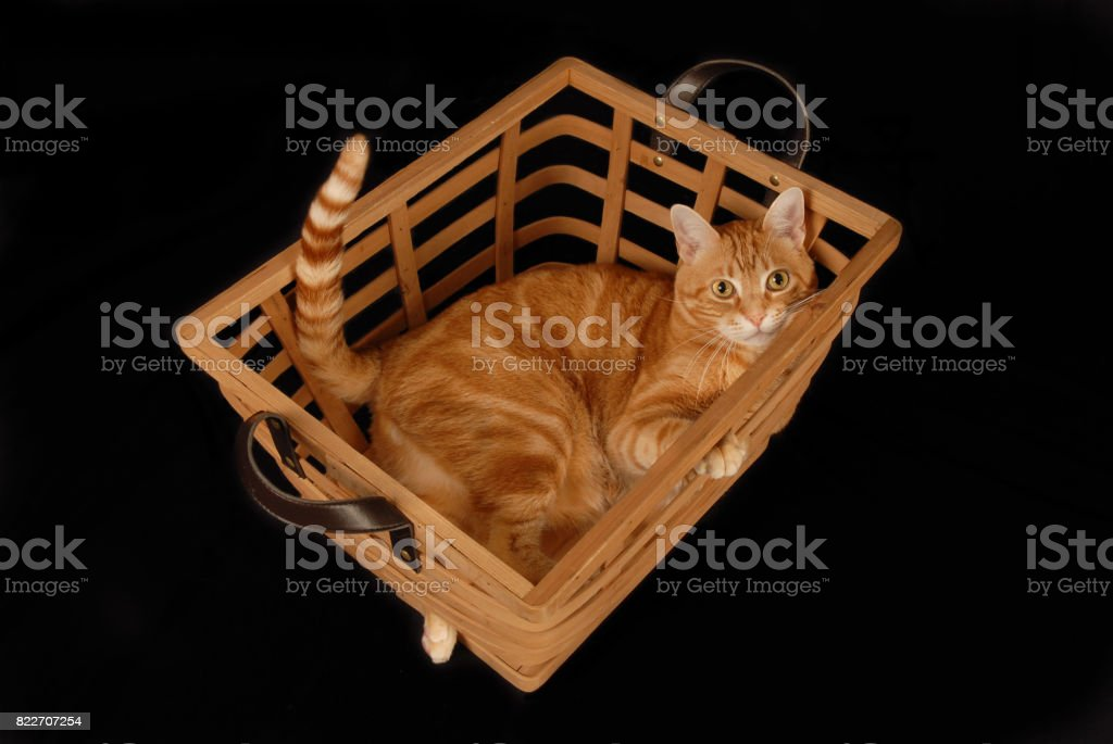 Basket Cat stock photo