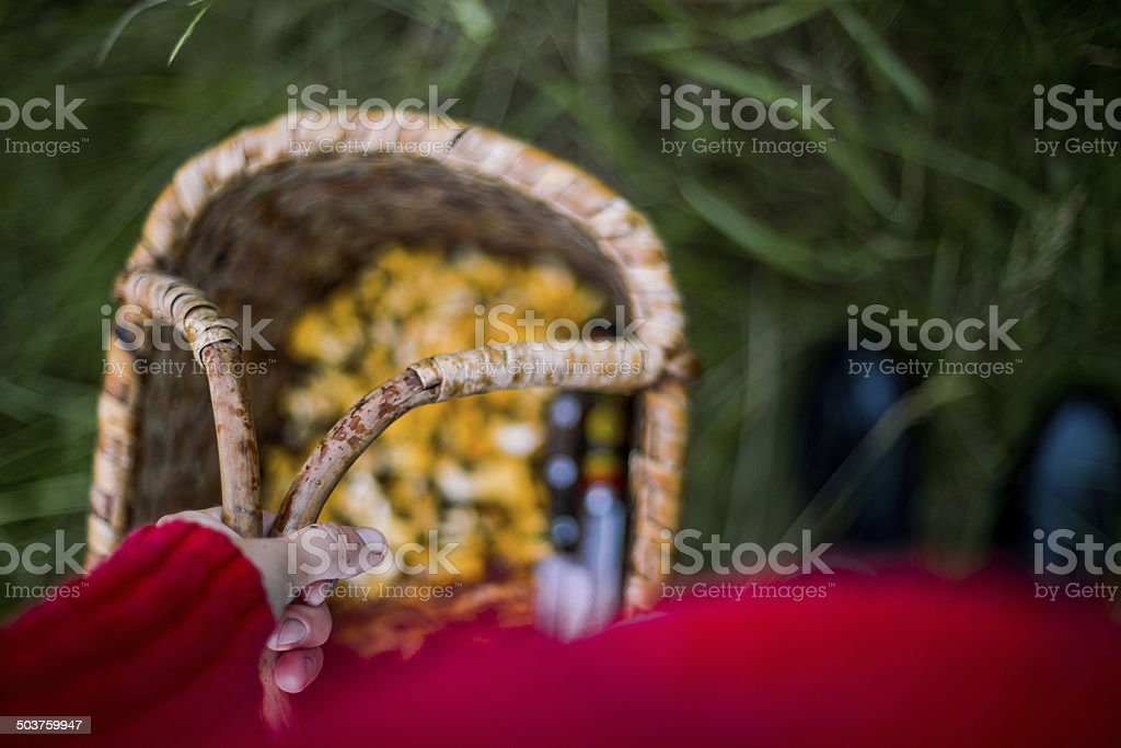 Basket filled with chantarelles stock photo