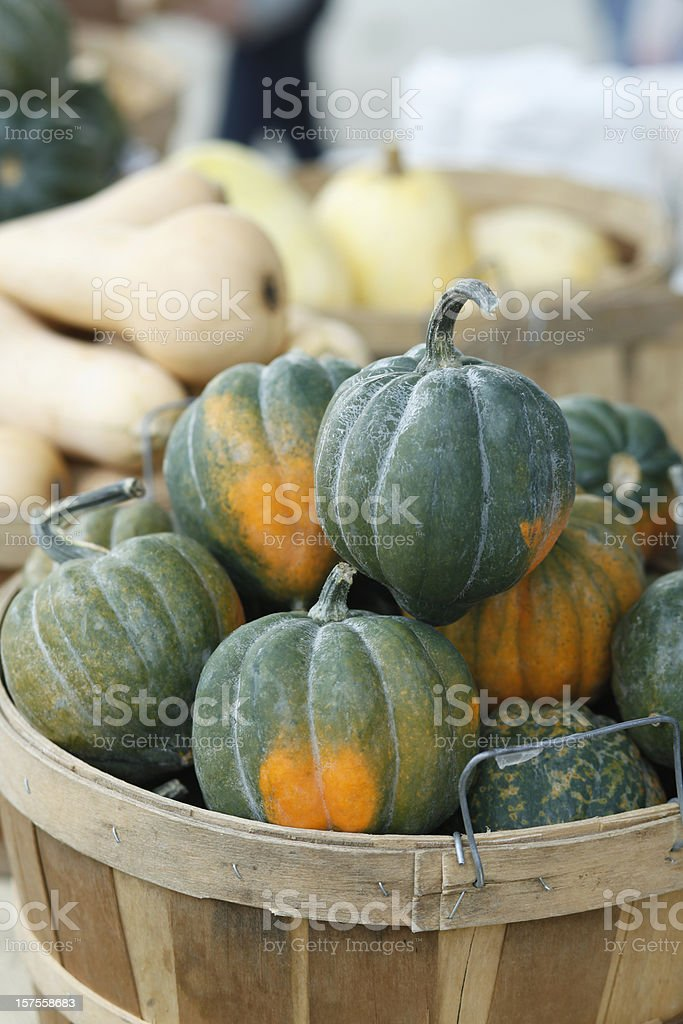 Basket filled with organic acorn squash stock photo
