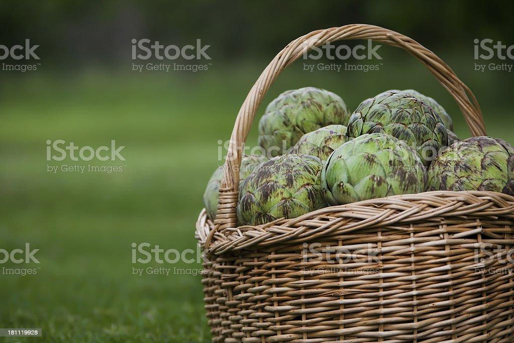 basket full of artichokes copy space left stock photo