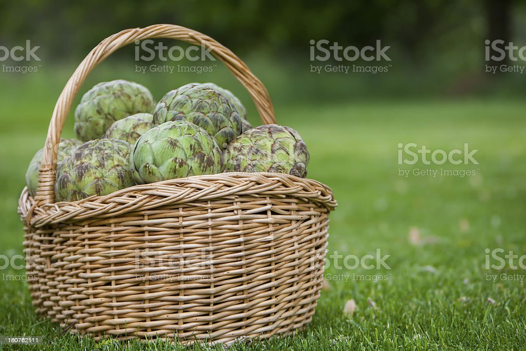 basket full of artichokes royalty-free stock photo