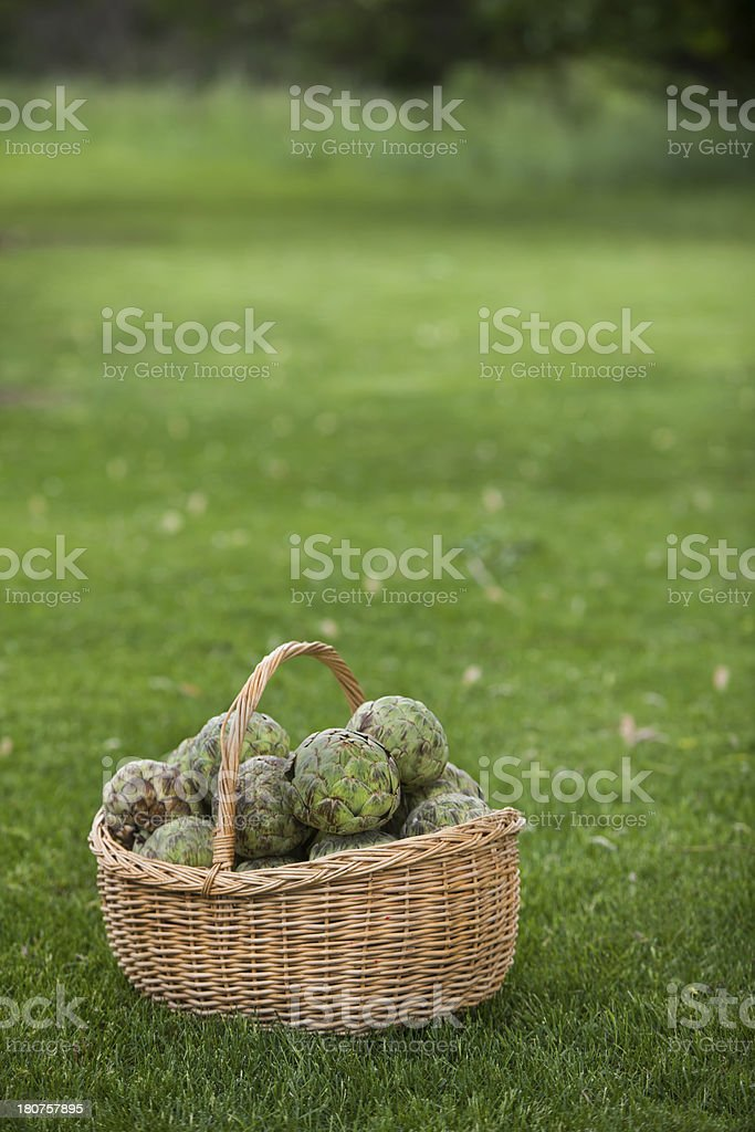 basket full of artichokes vert royalty-free stock photo
