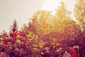 Basket full of flowers against sunlight
