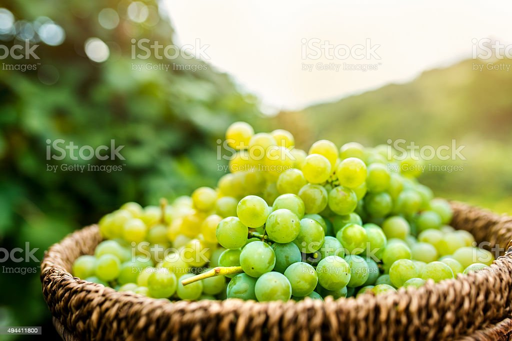 Basket full of grapes stock photo