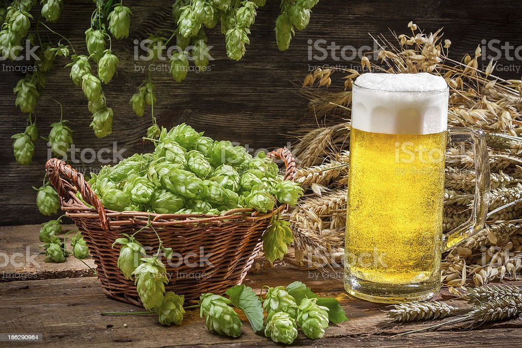 Basket full of hops and a cold beer royalty-free stock photo