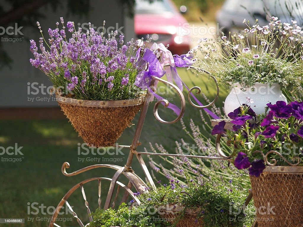 Basket full of Lavender stock photo
