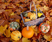 Basket full of ornamental pumpkins with colourful gourds