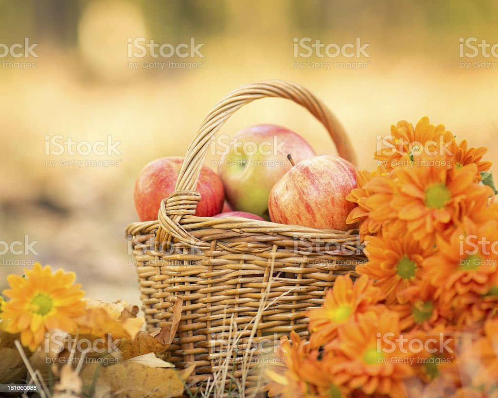 Basket full of red juicy apples royalty-free stock photo
