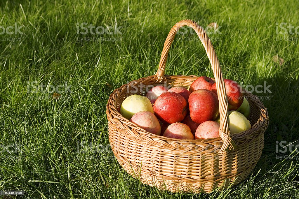 Basket of apples in afternoon sun. royalty-free stock photo