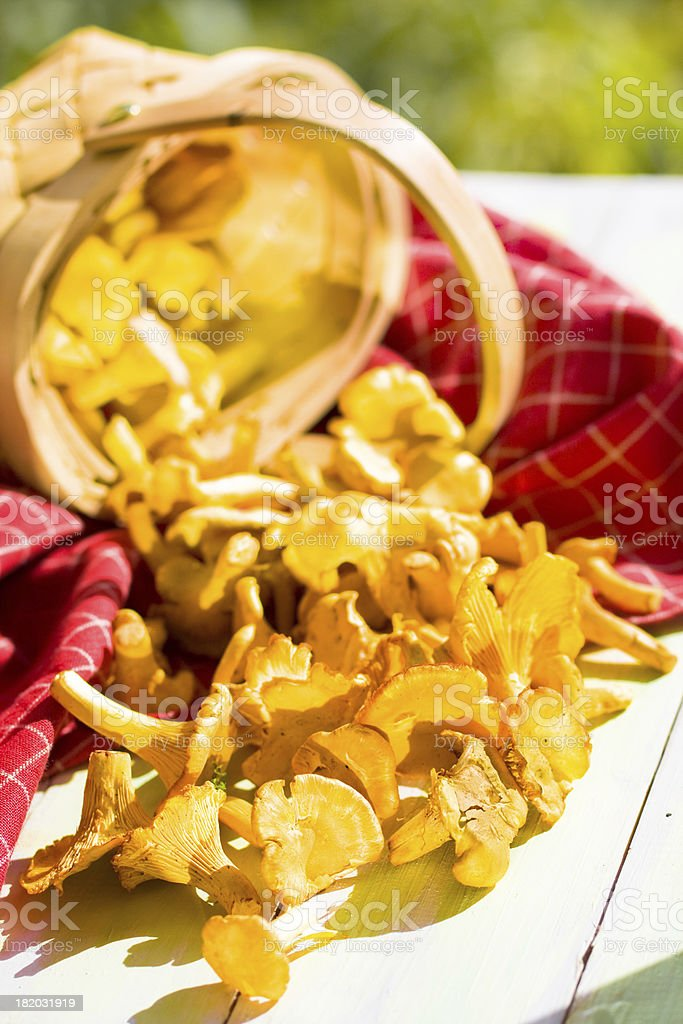 Basket of chanterelle on wooden background royalty-free stock photo