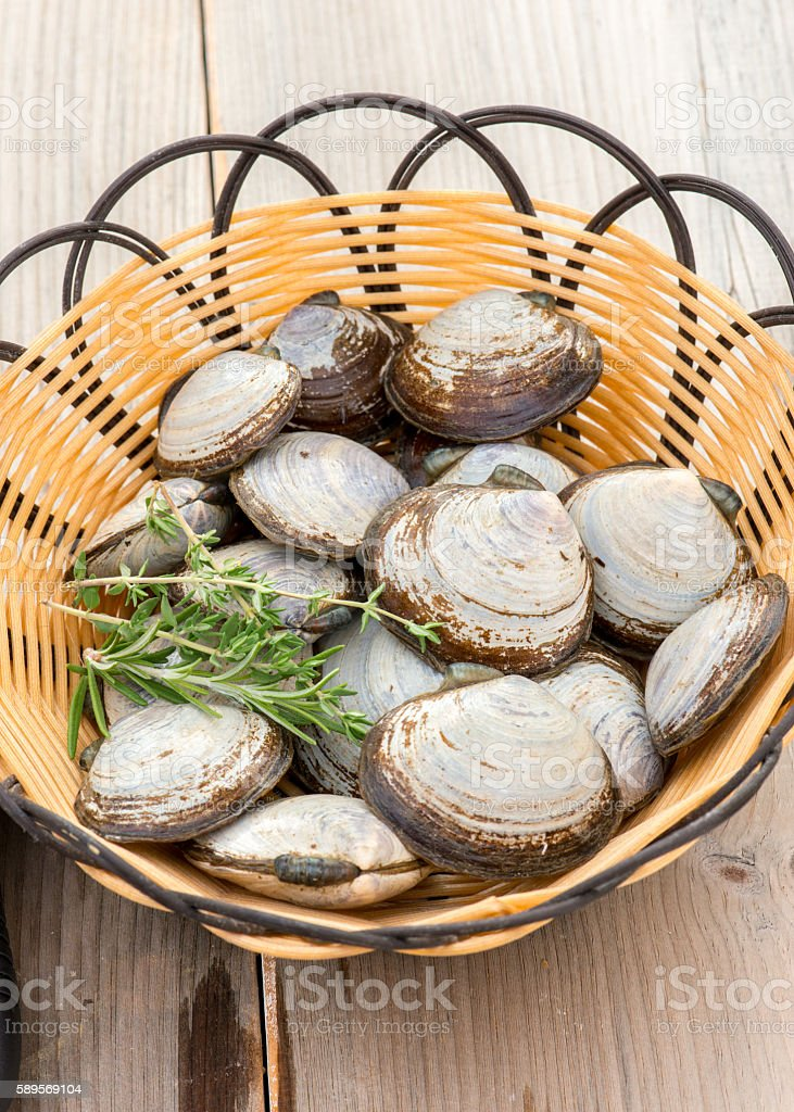 Basket of clams on weathered wood table. stock photo