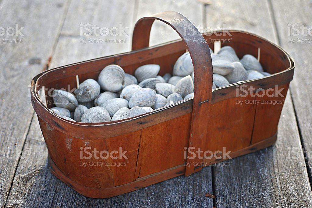 Basket of Clams stock photo