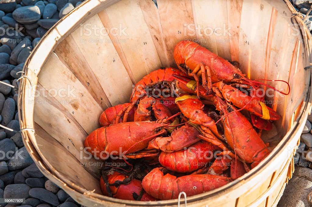 Basket of cooked lobsters on a beach stock photo