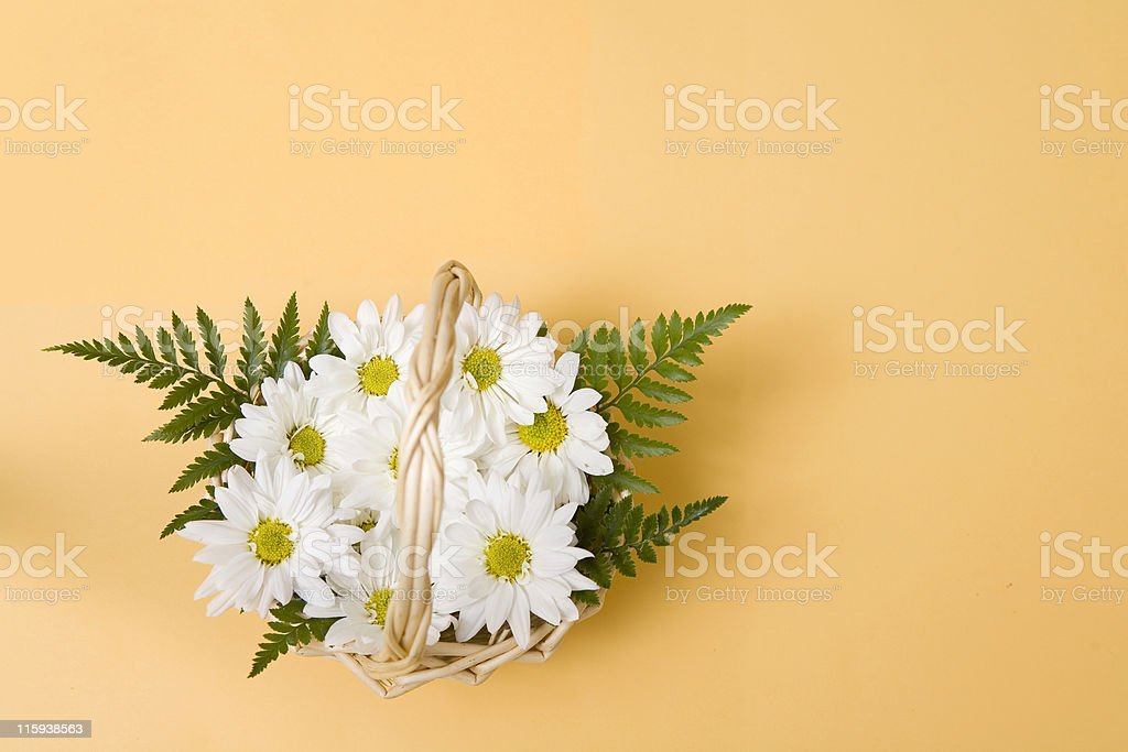 Basket of Daisies royalty-free stock photo